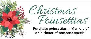 Poinsettias2017Post